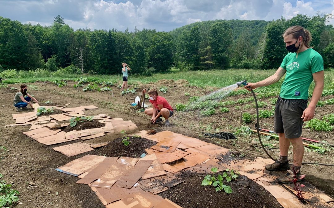 ShiftMeals GrowTeams Reflect and Plant Seeds for the Future
